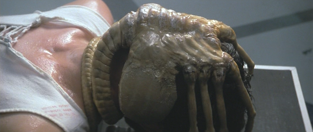 The Loom Knit Facehugger